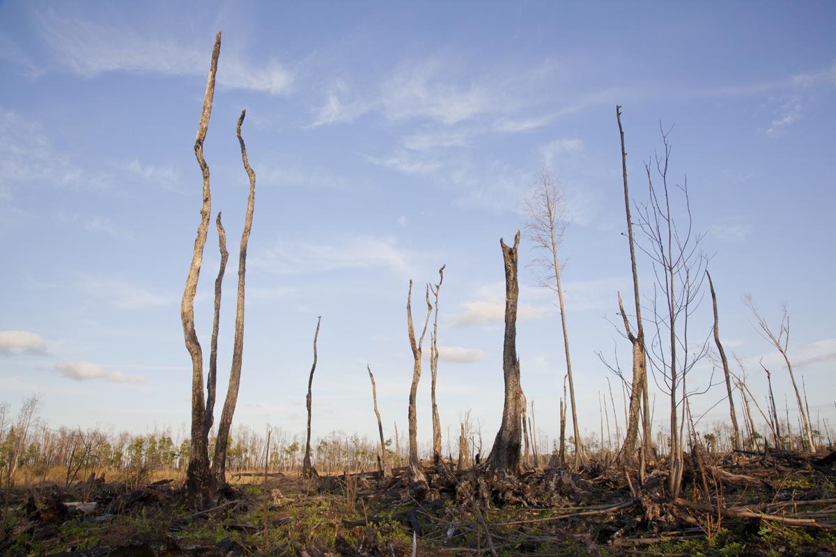 BurntSwamp1WEB