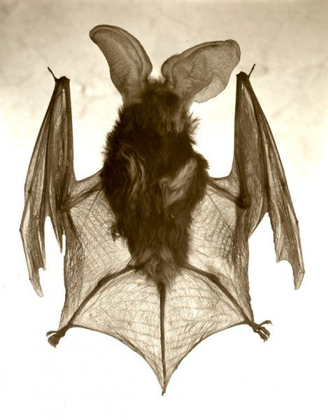 bat2web.jpg