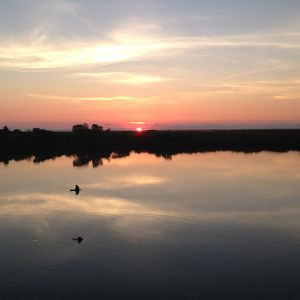 Sunrise, Irish Bayou, 2013